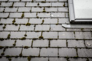 roof-cleaning-company-swansea (4)