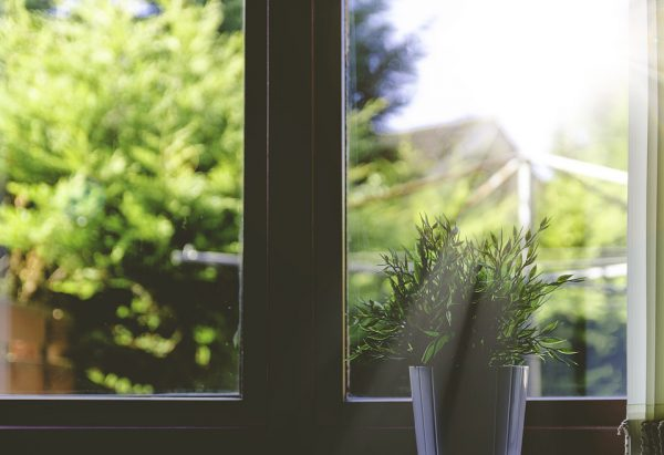A plant on a window sill